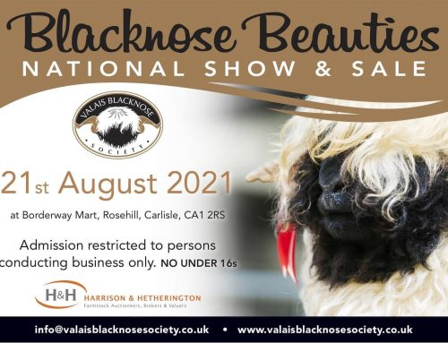 Blacknose Beauties National Show and Sale