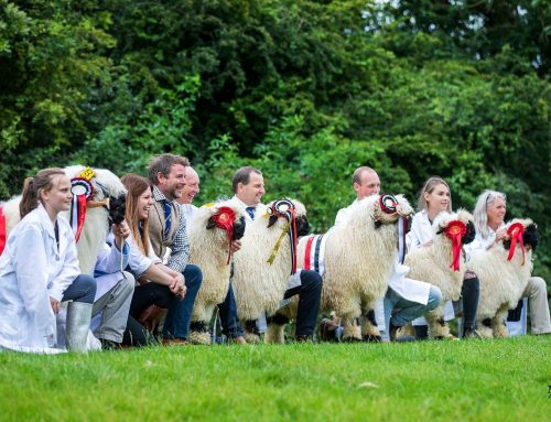 VBS Worcester Show and Sale Review